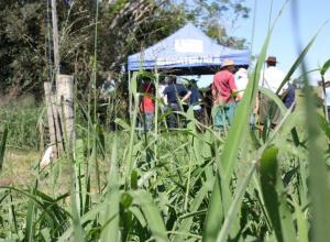Dia de campo apresentou os índices produtivos de 15 forrageiras tropicais