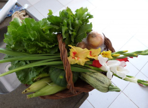 Feira Municipal do Produtor Rural trouxe produtos de qualidade e procedência para a praça